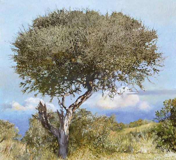 LEIGH VOIGT, Boscia albitrunca, Mapungubwe Oil on canvas